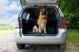 How to travel with a dog?