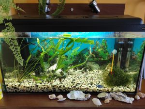 moving a fish tank