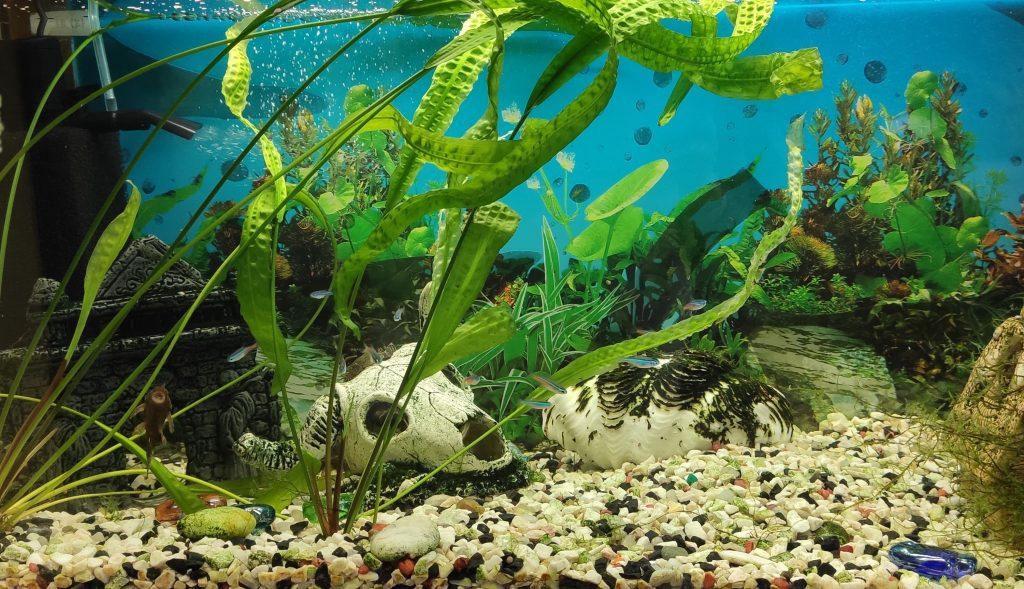 aquarium removal