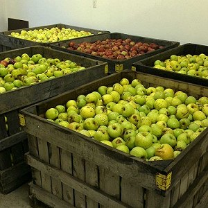 Delivery Apples - 4 pallets